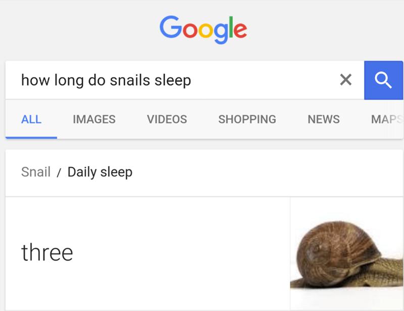 funny fail - Text - Google how long do snails sleep X MAPS ALL IMAGES VIDEOS SHOPPING NEWS Snail Daily sleep three