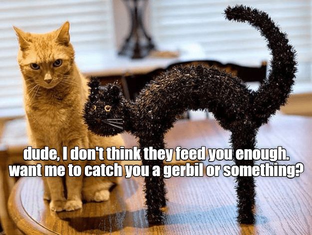 cat caption enough dont feed you - 9015193600