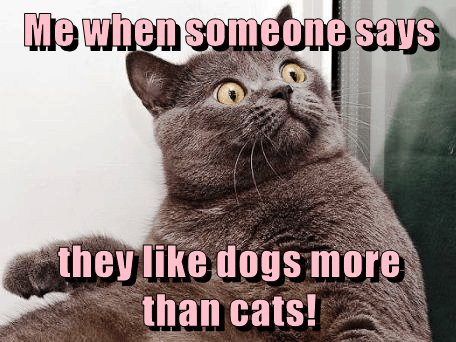 cat caption better dogs like somebody says - 9015218944