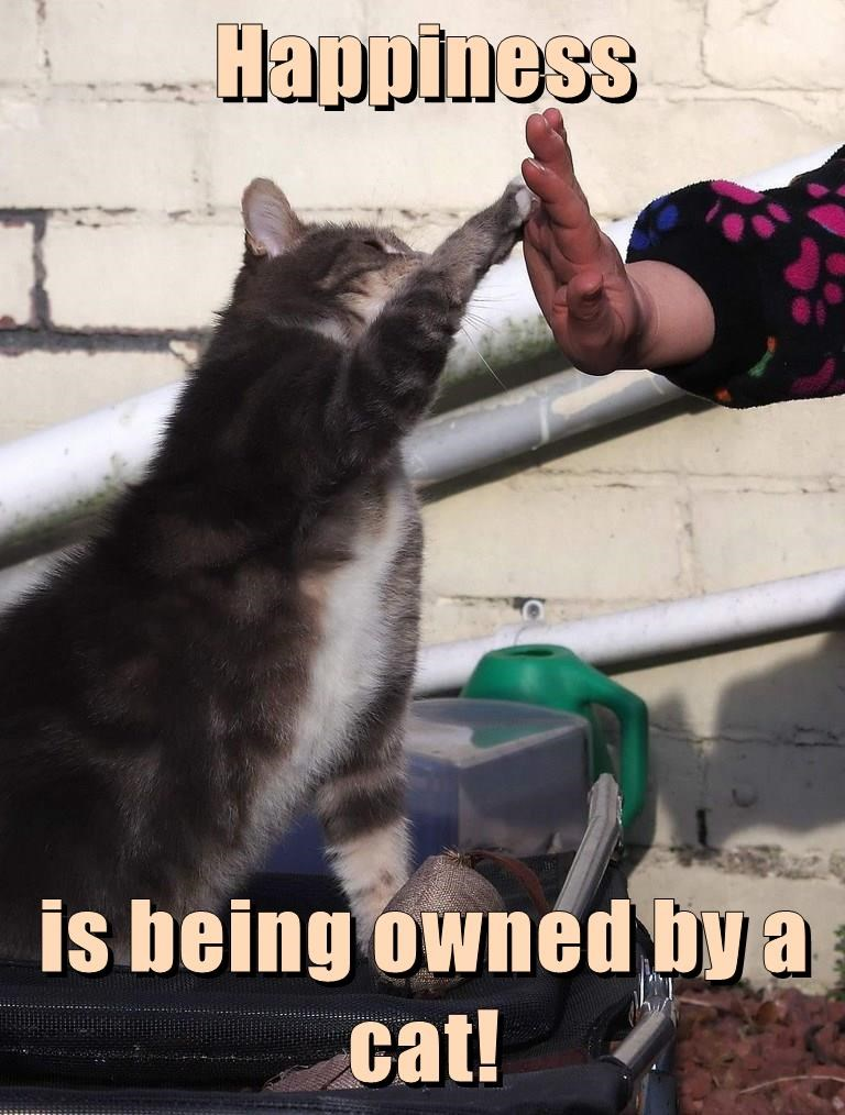 cat,being,caption,by,happiness,owned