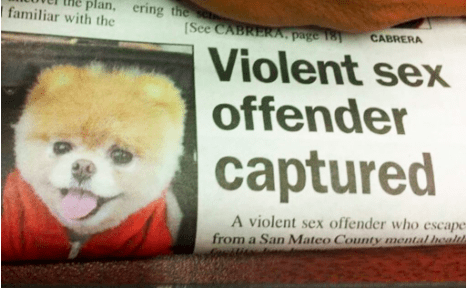 Pomeranian - plan, ering the s familiar with the See CABRERA, page 181 CABRERA Violent sex offender captured A violent sex offender who escape from a San Mateo County mental health