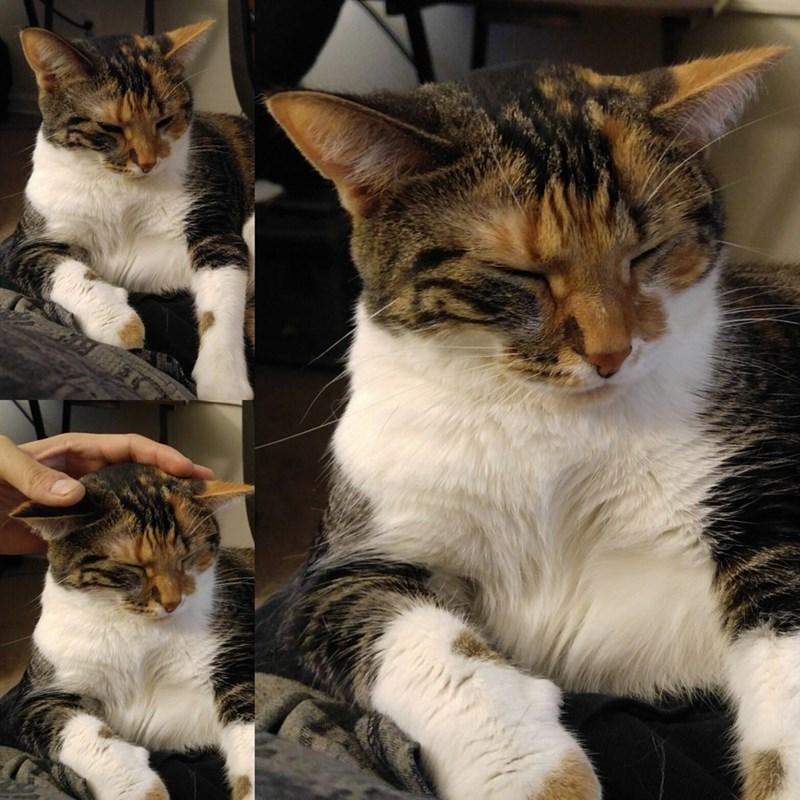 Cats ears - 9015253760