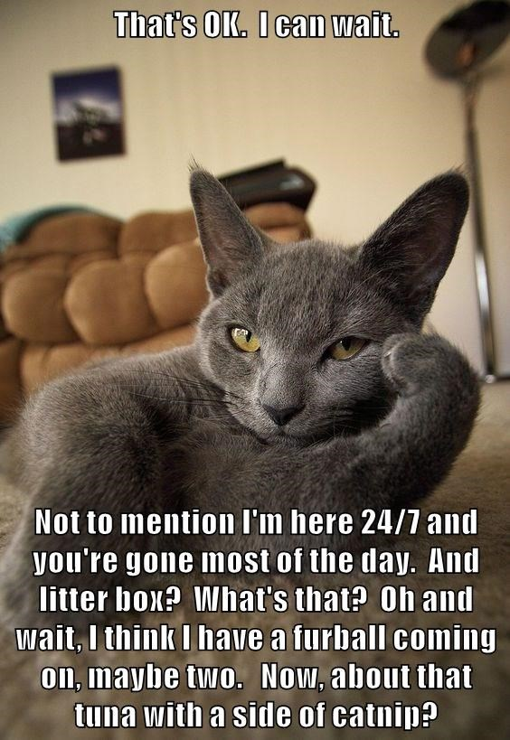 Its A Battle Youll Never Win Lolcats Lol Cat Memes Funny