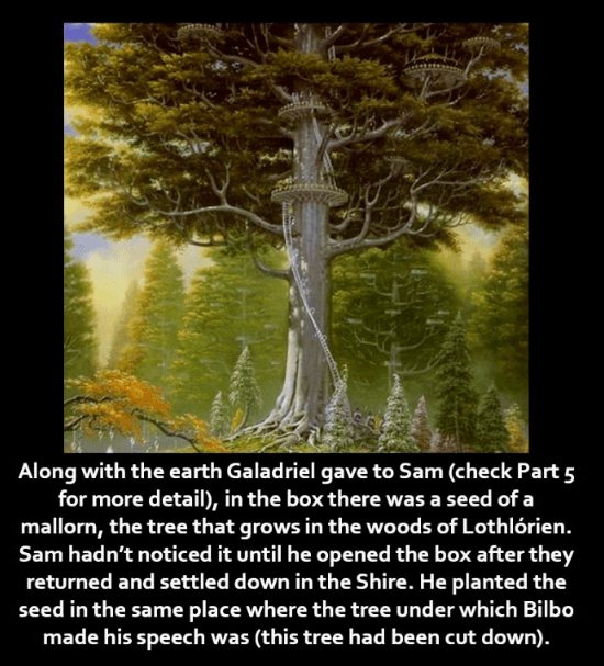 Nature - Along with the earth Galadriel gave to Sam (check Part 5 for more detail), in the box there was a seed of a mallorn, the tree that grows in the woods of Lothlórien. Sam hadn't noticed it until he opened the box after they returned and settled down in the Shire. He planted the seed in the same place where the tree under which Bilbo made his speech was (this tree had been cut down).