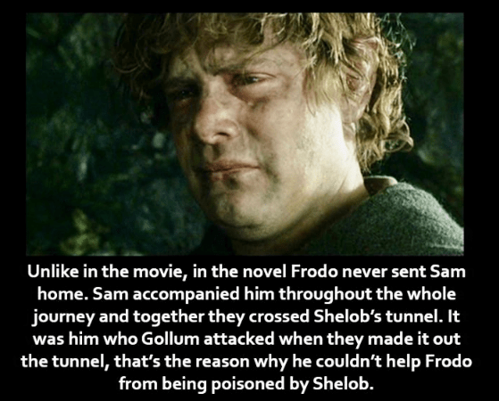 Photo caption - Unlike in the movie, in the novel Frodo never sent Sam home. Sam accompanied him throughout the whole journey and together they crossed Shelob's tunnel. It was him who Gollum attacked when they made it out the tunnel, that's the reason why he couldn't help Frodo from being poisoned by Shelob.