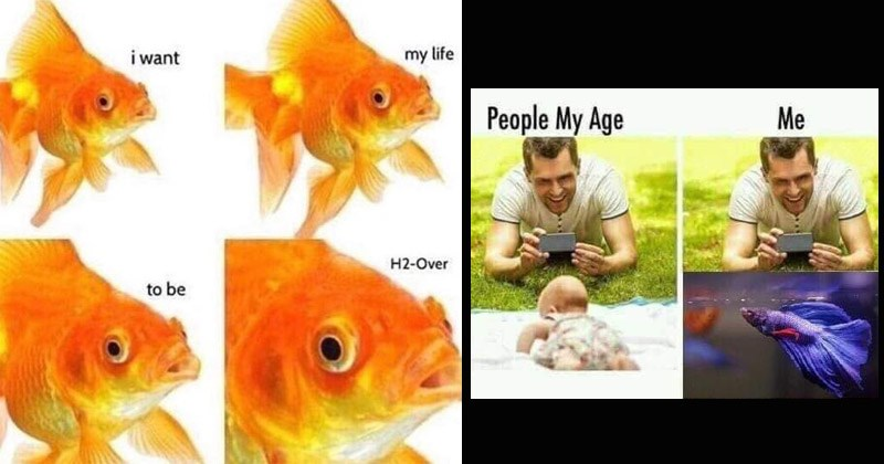 Funny memes about fish