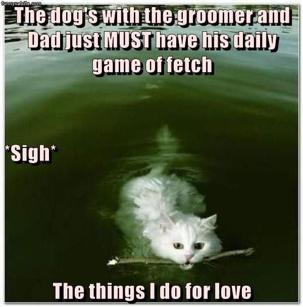 cat caption dogs dad fetch things love groomer - 9015314688