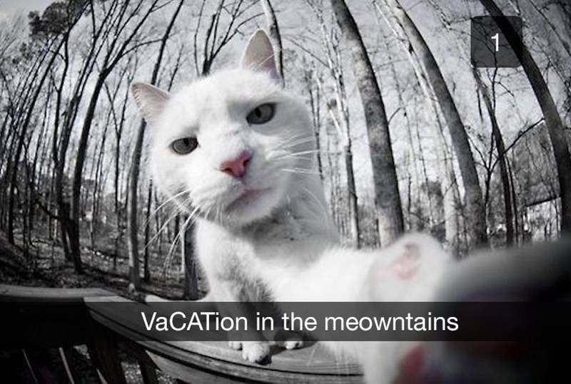 Cat - VaCATion in the meowntains