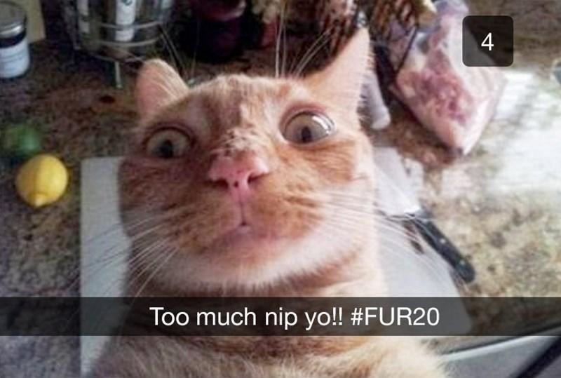 Cat - Too much nip yo!! #FUR20 4