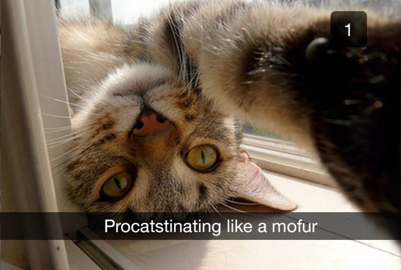 Cat - Procatstinating like a mofur