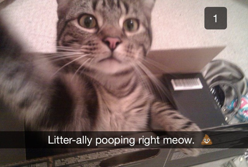 Cat - 1 Litter-ally pooping right meow.