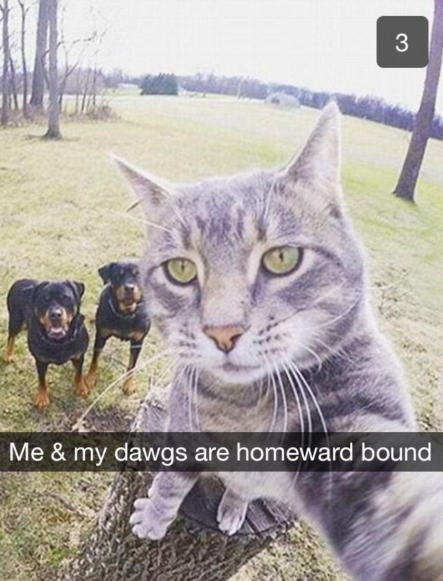 Cat - 3 Me & my dawgs are homeward bound