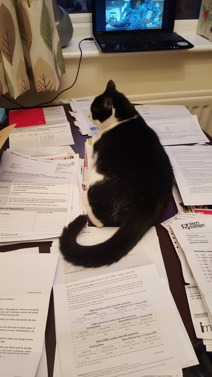 These Business Cats Are the Purrfect Office Assistants That