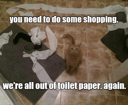 cat out shopping again toilet paper caption need