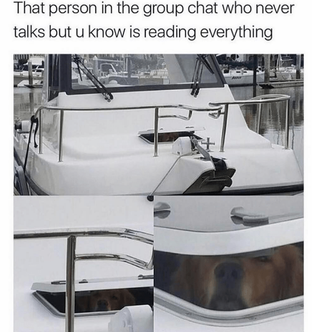happy meme of a dog peaking from a window inside a boat