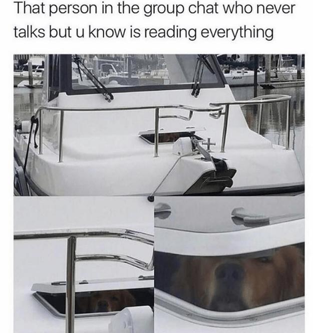 happy meme of a dog peaking from a window inside a boat