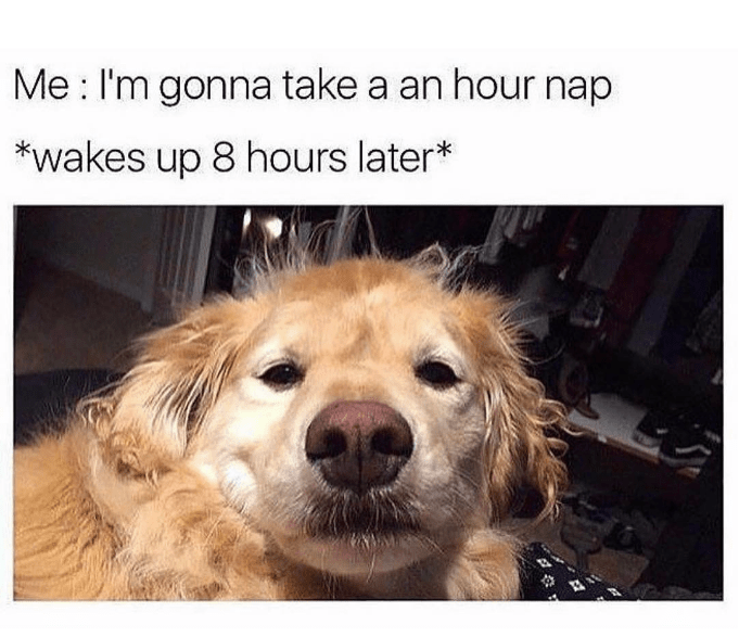 happy meme of a golden retriever and taking a nap that was longer than you expected