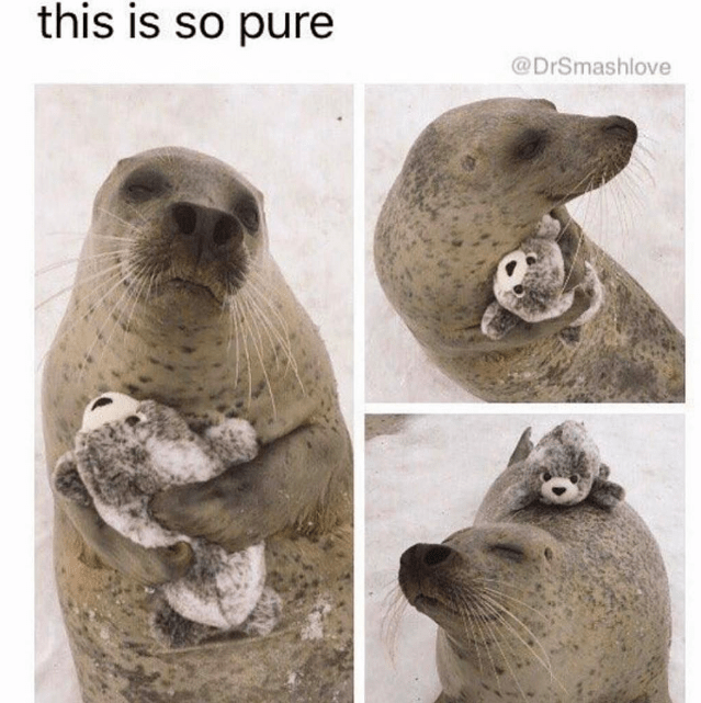 happy meme of a seal holding a stuffed animal that is a seal