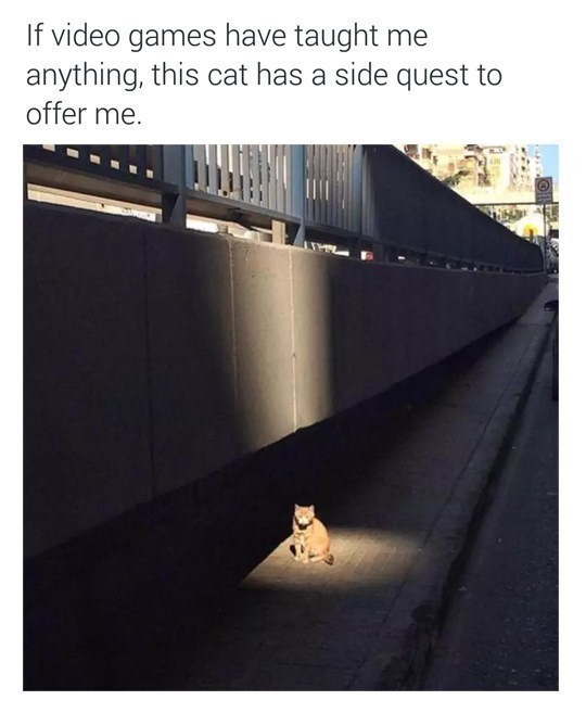 Text - If video games have taught me anything, this cat has a side quest to offer me.
