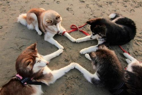 Witches,husky,beach