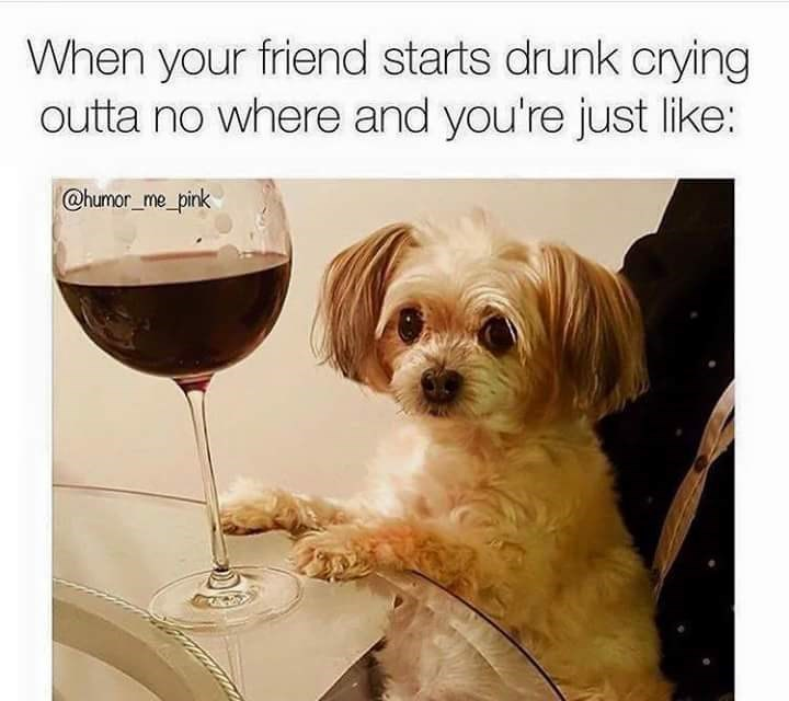 Dog - When your friend starts drunk crying outta no where and you're just like: @humor_me_pink