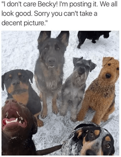 "Dog - ""I don't care Becky! I'm posting it. We all look good. Sorry you can't take a decent picture."""