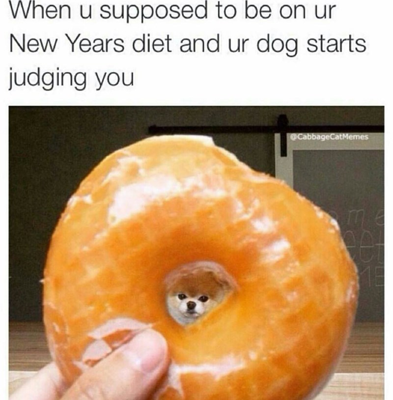 Food - When u supposed to be on ur New Years diet and ur dog starts judging you @CabbageCatMemes
