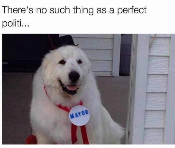 Dog - There's no such thing as a perfect politi... MAYOR