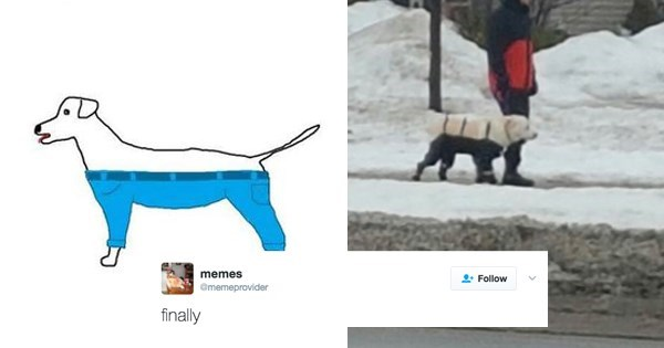 fail tweet dogs wear pants