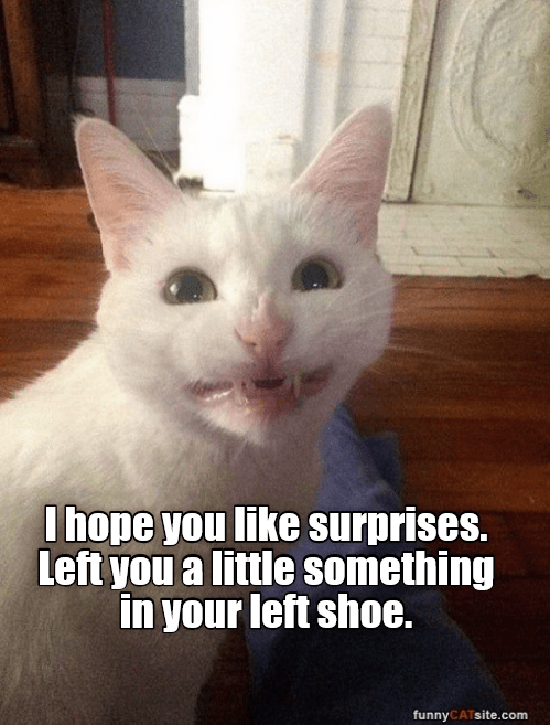 Funny cat meme of a white cat smiling and showing his teeth captioned that kitty has left you a 'surprise' in your shoe.