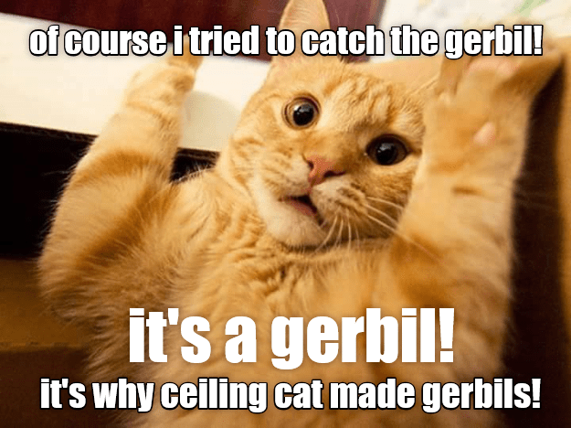 tried cat catch gerbil ceiling cat caption made - 9016056064