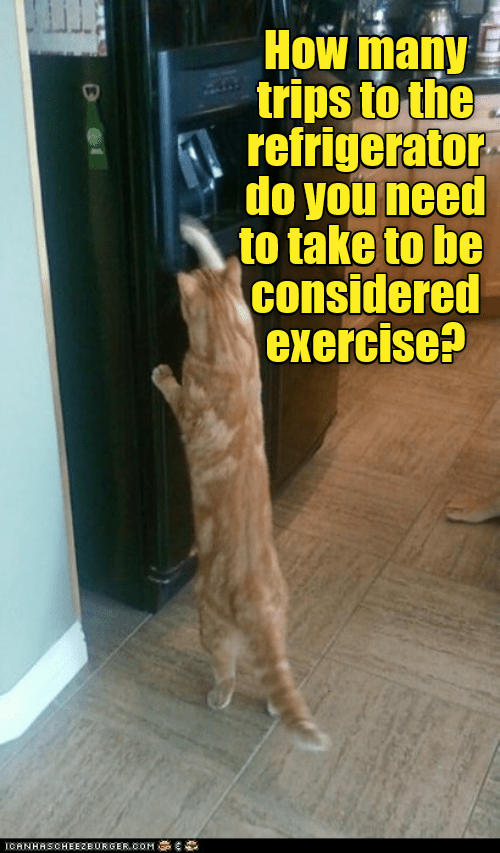 cat exercise refrigerator trips caption - 9016131584