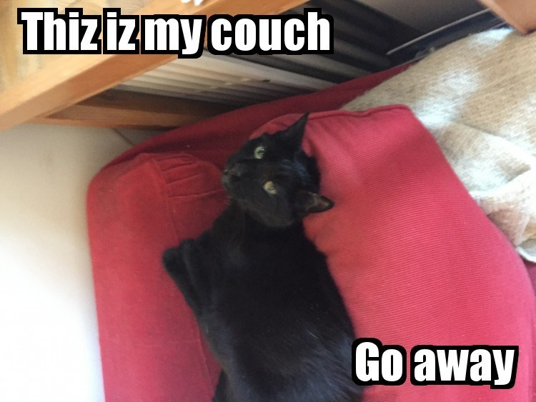 cat couch my go caption away - 9016144640