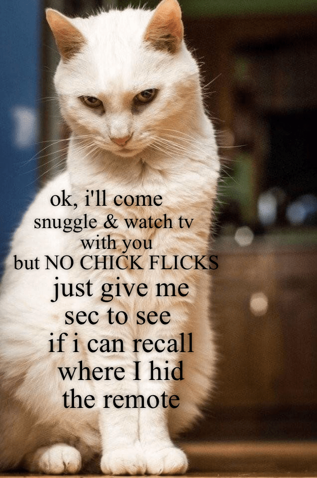 cat snuggle TV watch chick flick caption no - 9016233984