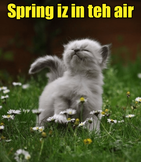 in cat is spring caption air - 9016345344