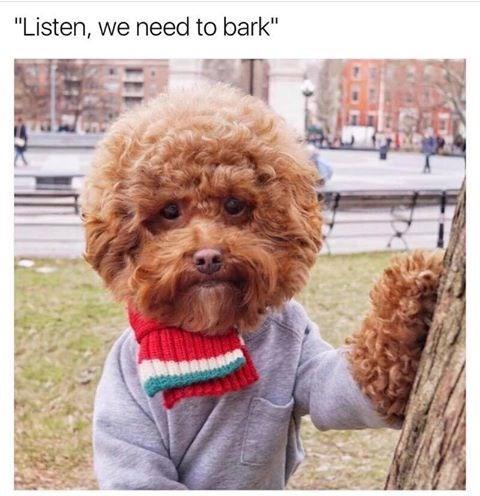 "Dog - ""Listen, we need to bark"""