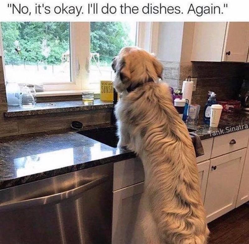 """Dog - """"No, it's okay. I'll do the dishes. Again."""" SUNS Tank Sinatra"""