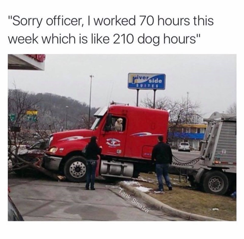 "Vehicle - ""Sorry officer, I worked 70 hours this week which is like 210 dog hours"" riverside SUITES Tank.Sinatra"