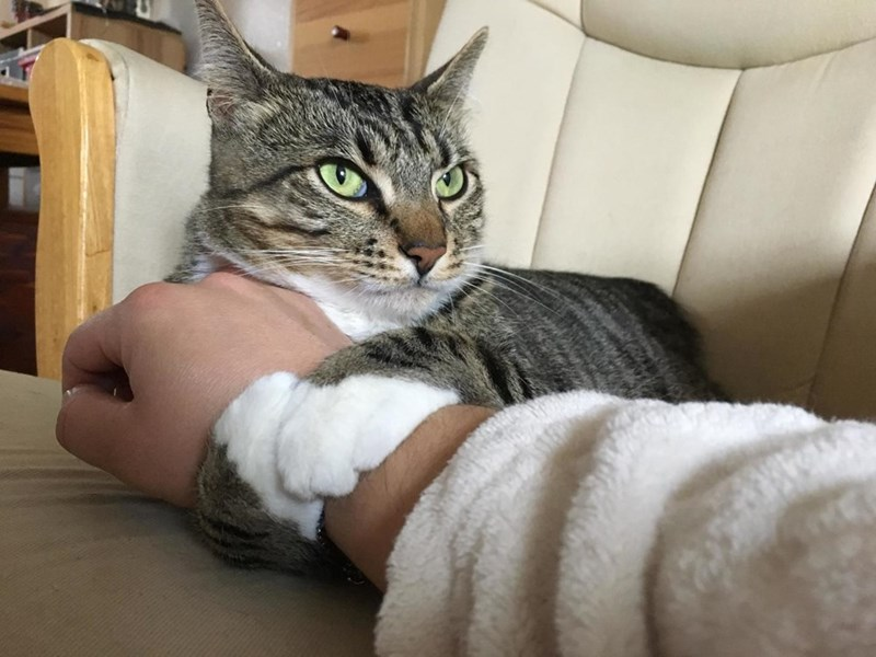 Cats mine - 9016397568