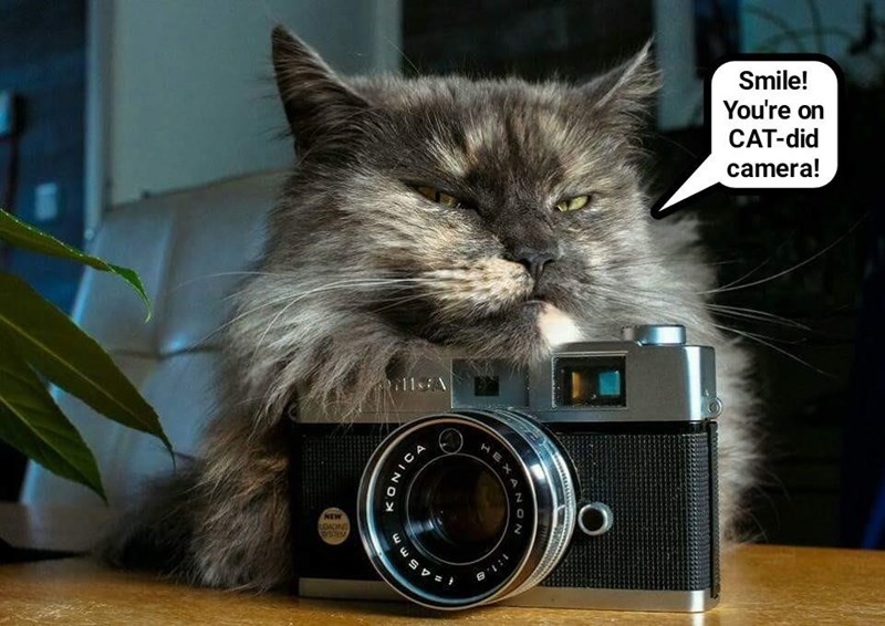 Image result for camera cat