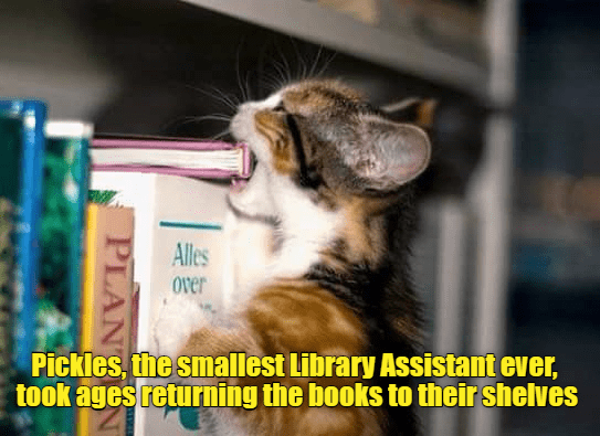 assistant,cat,smallest,library,caption