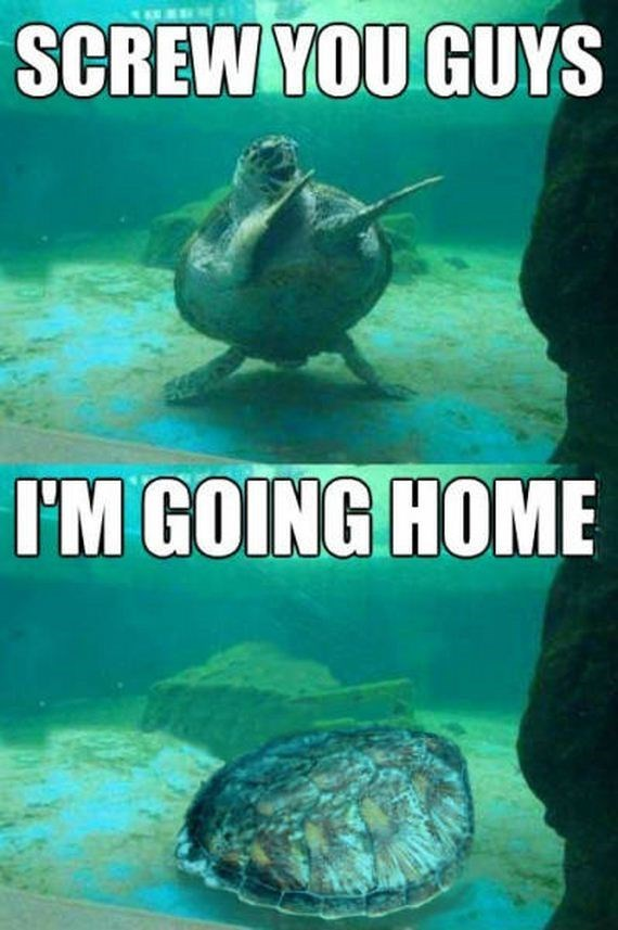 Green sea turtle - SCREW YOU GUYS I'M GOING HOME