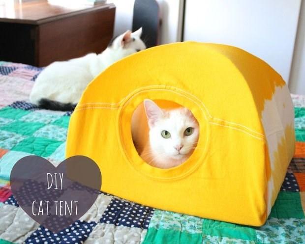 Cat - DIY CAT TENT