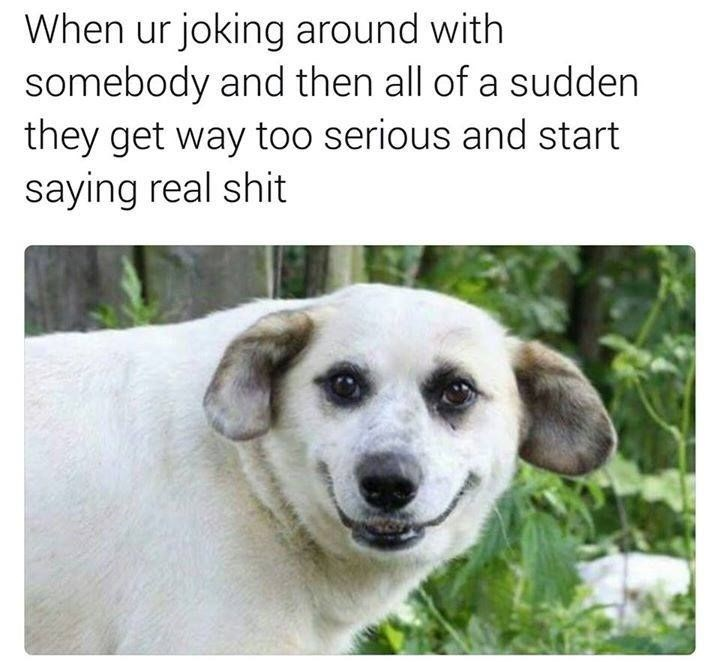 Dog breed - When ur joking around with somebody and then all of a sudden they get way too serious and start saying real shit