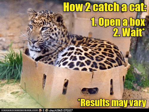 Funny picture of a big cat in a box, making a joke like he is the same as a house cat in the caption of the meme.