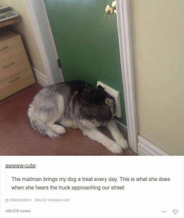 cute animal meme of a dog peaking through hole in the door