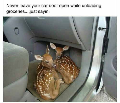 animal meme of deer that climbed into the car when the door was left open