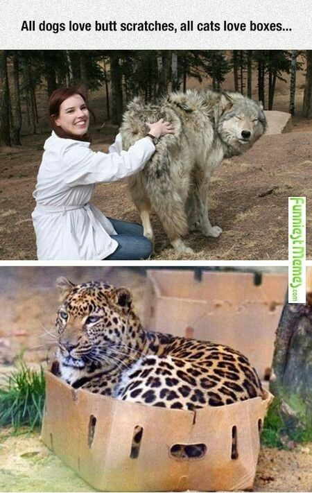 animal meme of dogs vs cats