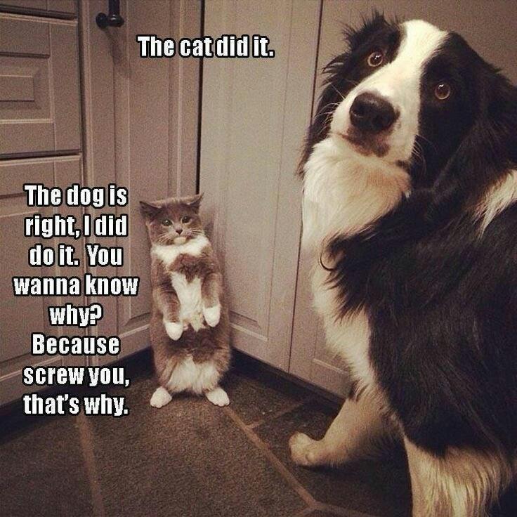 cat vs dog meme