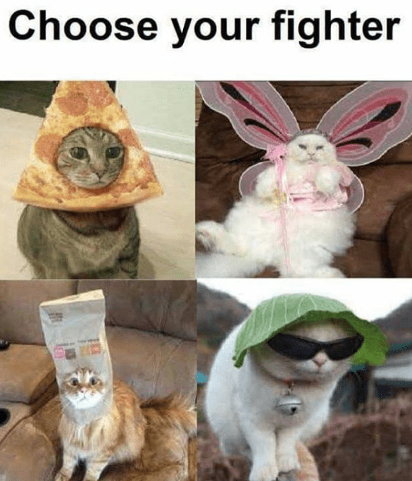 choose your fighter cat meme